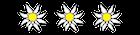 symbolEdelweisse
